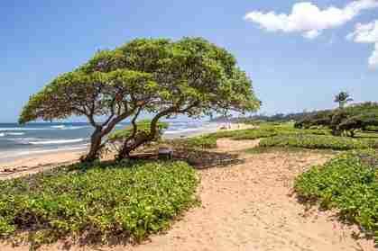 4331 Kauai Beach Dr #3312 Lihue HI 96766 - photo #1