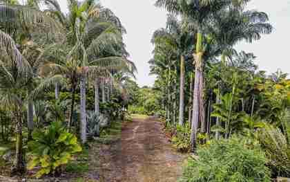 27-2760 Hawaii Belt Rd Pepeekeo HI 96783 - photo #2