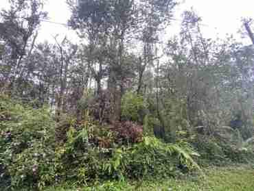 MAUI RD PAHOA HI 96778 - photo #2