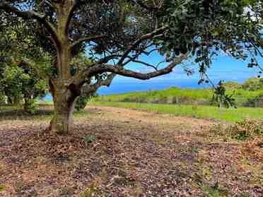 89-995 Hawaii Belt Rd Captain Cook HI 96704
