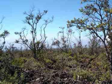 Koa Ln Ocean View HI 96737