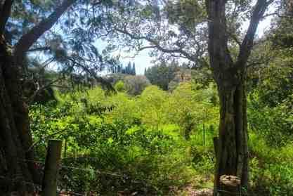 43-1866 Manienie Road Paauilo HI 96776