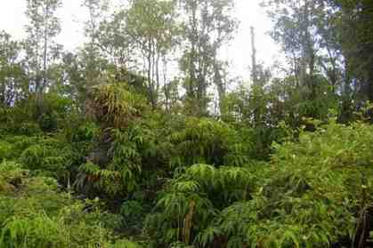 11-2105 Jungle King Ave Volcano HI 96785